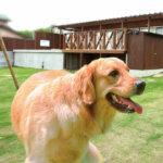 ペット・愛犬OKの関西のグランピング施設(最新2021年版)