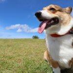 ペット・愛犬OKの関東グランピング施設15選