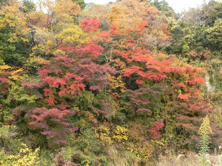 紅葉の美しい養老渓谷
