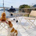 静岡県でペットと一緒に泊まれるグランピング施設