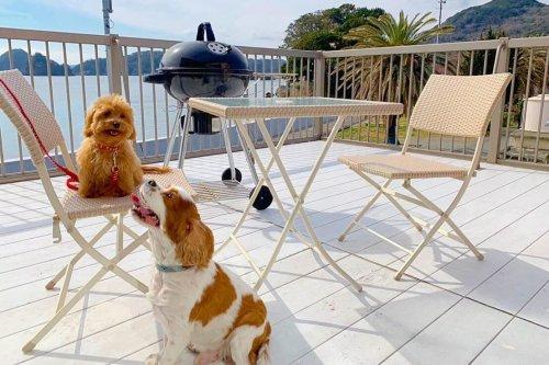 ワンちゃんと一緒に、オーシャンビューが楽しめるSea Shell Vacation House