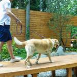 東海地方(三重県・岐阜県)で愛犬とお泊まりできるグランピング施設7選