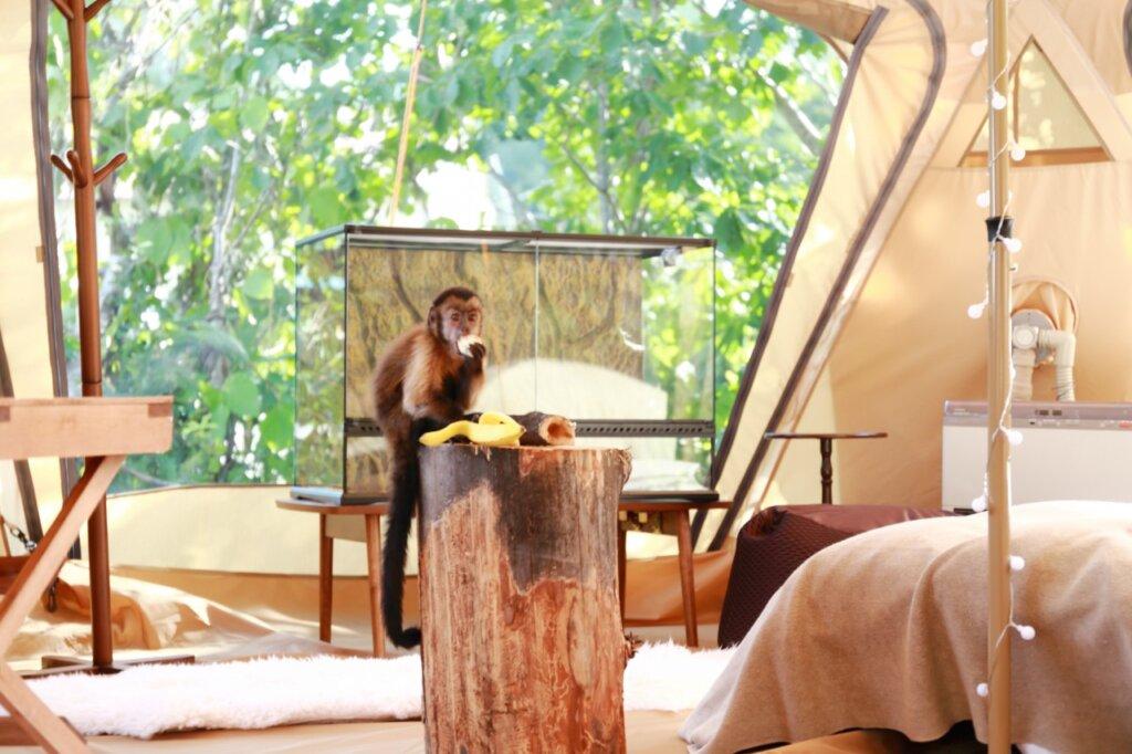 動物と一緒に泊まれるノースサファリサッポロのアニマルグランピング