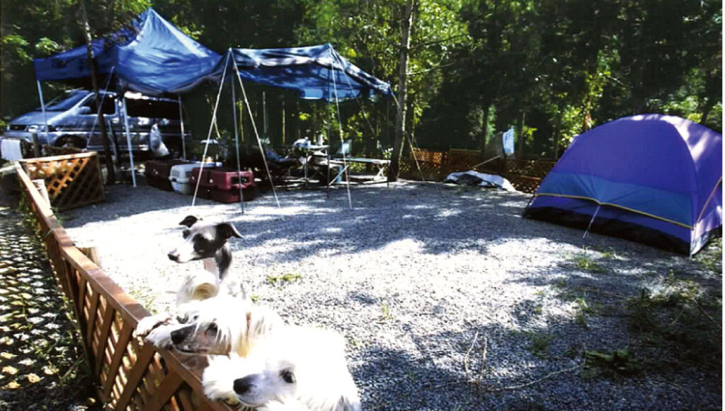 柵があるので安心してワンちゃんと楽しめるNAO明野高原キャンプ場&貸別荘